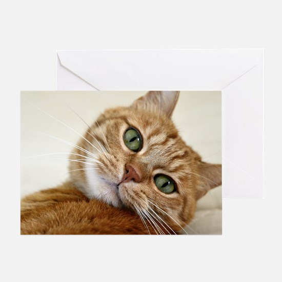 Sweet Cat Greeting Card