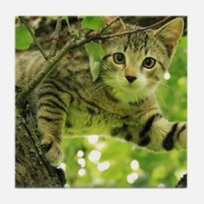 Sweet Cat Tile Coaster
