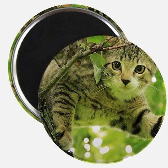 Sweet Cat Magnet