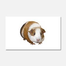 Guinea Pig Car Magnet 20 x 12