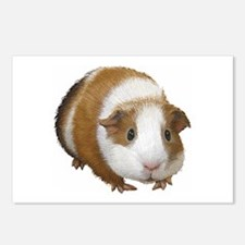Guinea Pig Postcards (Package of 8)