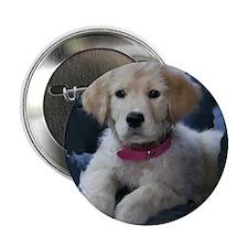 """Golden Retriever Puppy 2.25"""" Button (10 pack)"""