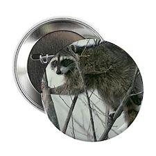 "Raccoon 2.25"" Button (10 pack)"