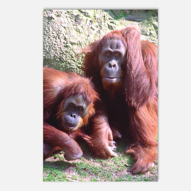 Orangs Hand on Head Postcards (8)