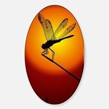Sunset Dragonfly Decal