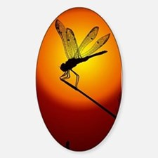 Sunset Dragonfly Sticker (Oval)