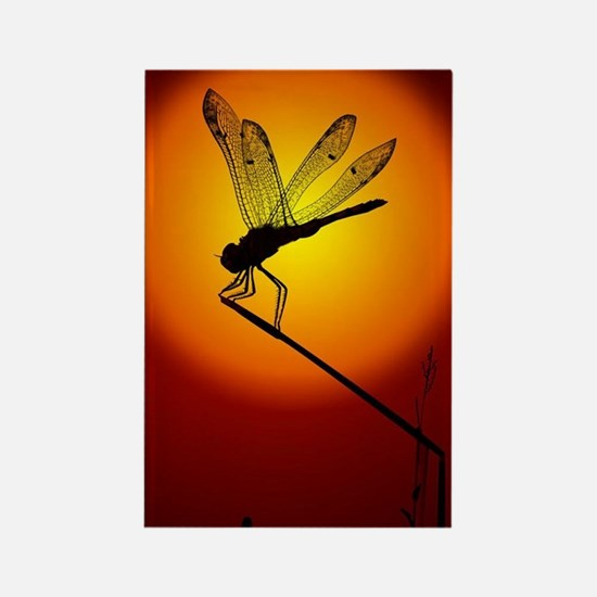 Sunset Dragonfly Rectangle Magnet