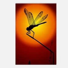 Sunset Dragonfly Postcards (Package of 8)