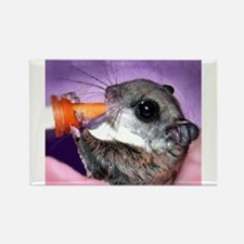 Baby Flying Squirrel Magnets