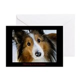 Sheltie christmas Greeting Cards (20 Pack)