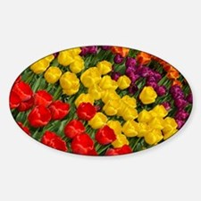 Colorful spring tulips in rows Sticker (Oval)