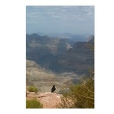 Grand Canyon Crow Postcards (Package of 8)