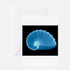 X-ray of a paper nautilus shell, Argonauta hians -
