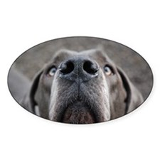 The Great Dane nose Decal