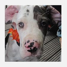 Dane Puppy Daisy Tile Coaster