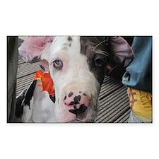 Dane Puppy Daisy Decal