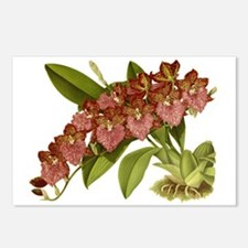 Vintage Orchid Postcards (Package of 8)