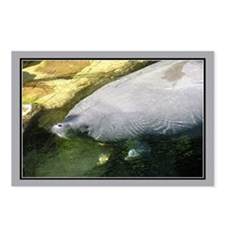 ...Manatee... Postcards (Package of 8)