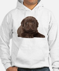 Chocolate Lab Puppy Hoodie