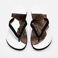 Chocolate Lab Puppy Flip Flops