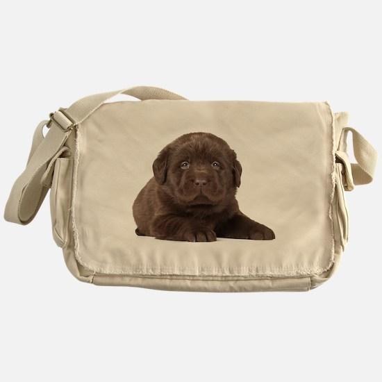 Chocolate Lab Puppy Messenger Bag