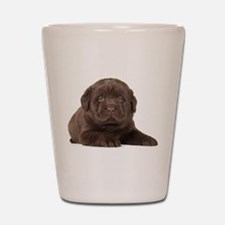 Chocolate Lab Puppy Shot Glass