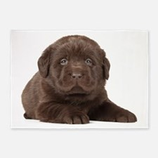 Chocolate Lab Puppy 5'x7'Area Rug