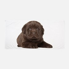 Chocolate Lab Puppy Beach Towel