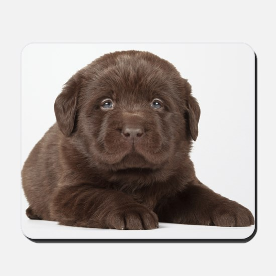 Chocolate Lab Puppy Mousepad