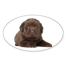 Chocolate Lab Puppy Decal