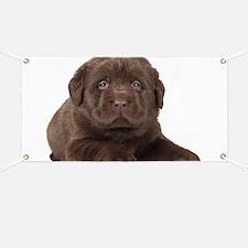 Chocolate Lab Puppy Banner