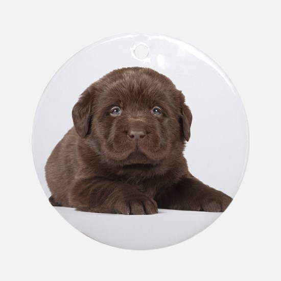 Chocolate Lab Puppy Ornament (Round)