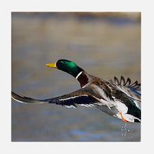 duck in flight Tile Coaster