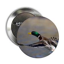 """duck in flight 2.25"""" Button"""