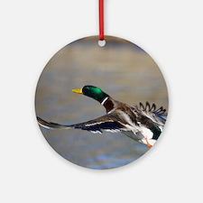 duck in flight Round Ornament