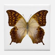 CHARAXES VARANES Tile Coaster