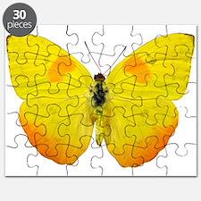 PHOEBIS PHILEA Puzzle