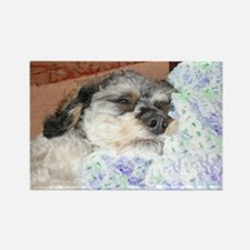 Cuddly Yorki-Poo Mix Rectangle Magnet