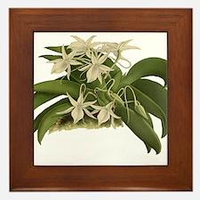 Vintage Orchid Framed Tile