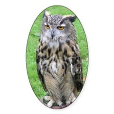 ...Eagle Owl 05... Oval Decal