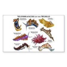 Nudibrachs of the World Decal