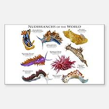 Nudibrachs of the World Sticker (Rectangle)