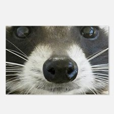 Raccoon Face Postcards (Package of 8)