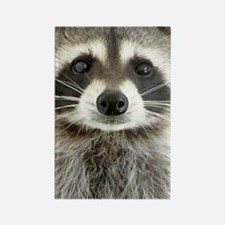 Raccoon Rectangle Magnet
