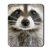 Raccoon Mouse Pads