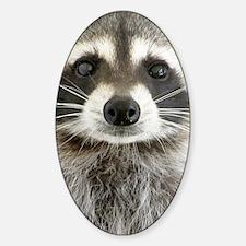 Raccoon Decal