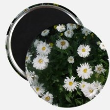 dollup of daisies Magnet