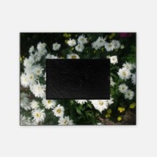 dollup of daisies Picture Frame