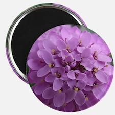 the purple flower Magnet