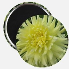 mellow yellow Magnet